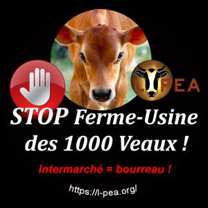 badge-1000-veaux2